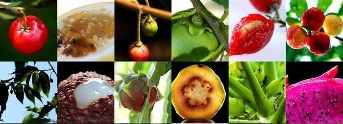 Не смотря на разнообразие экзотических фруктов, ребенку лучше давать более привычные региону, где он родился
