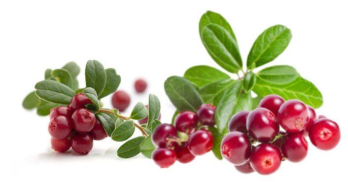 У брусники полезны и плоды и листья