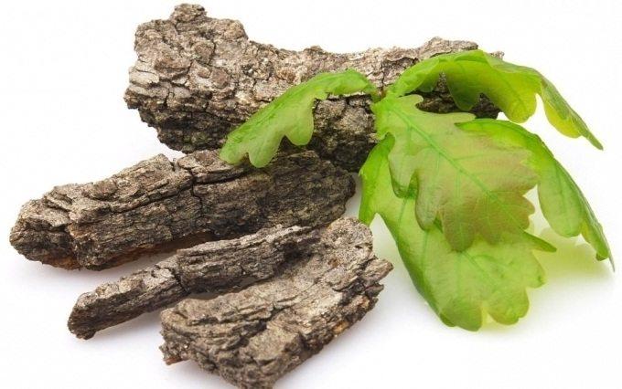 Кора дуба является народным средством от многих болезней