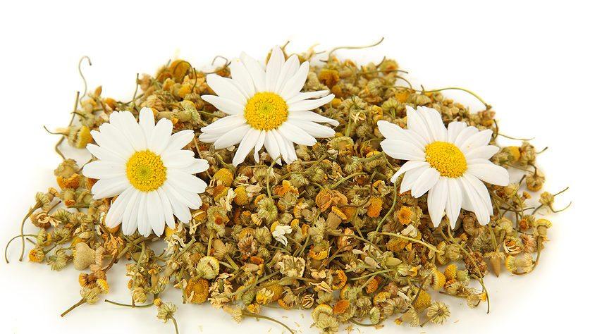 Ромашковый чай - единственный чай, который разрешен детям с первых месяцев