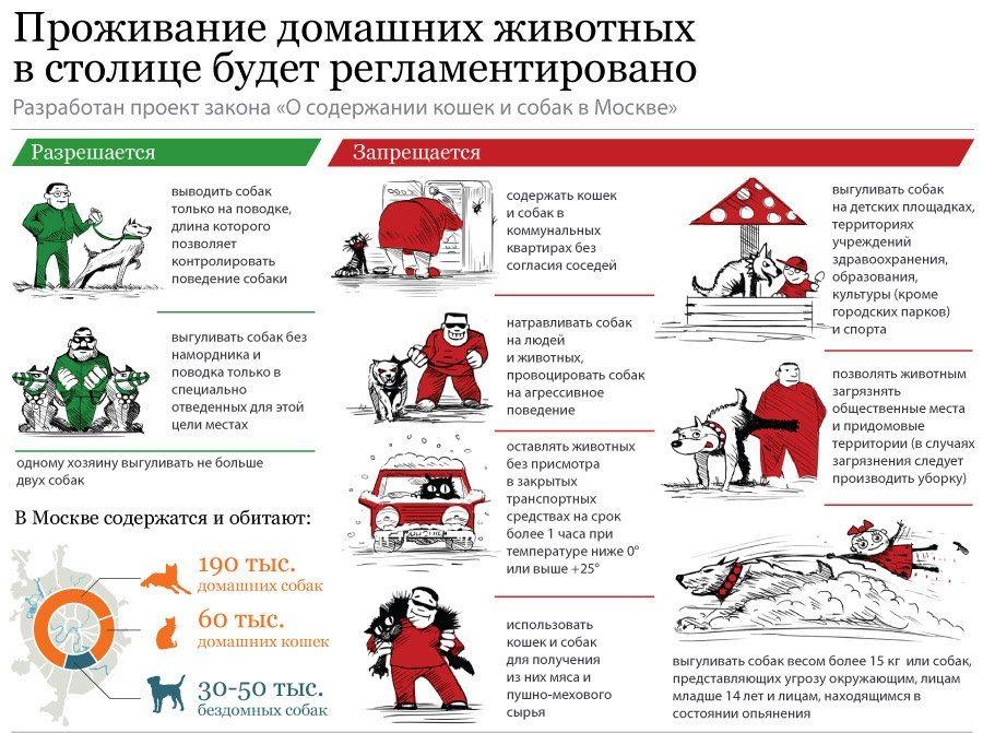 Правила проживания домашних собак и кошек