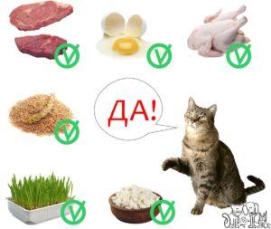 Что можно кушать кошкам