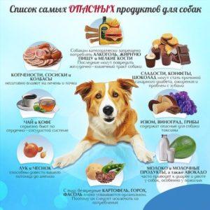 Что нельзя кушать собаке
